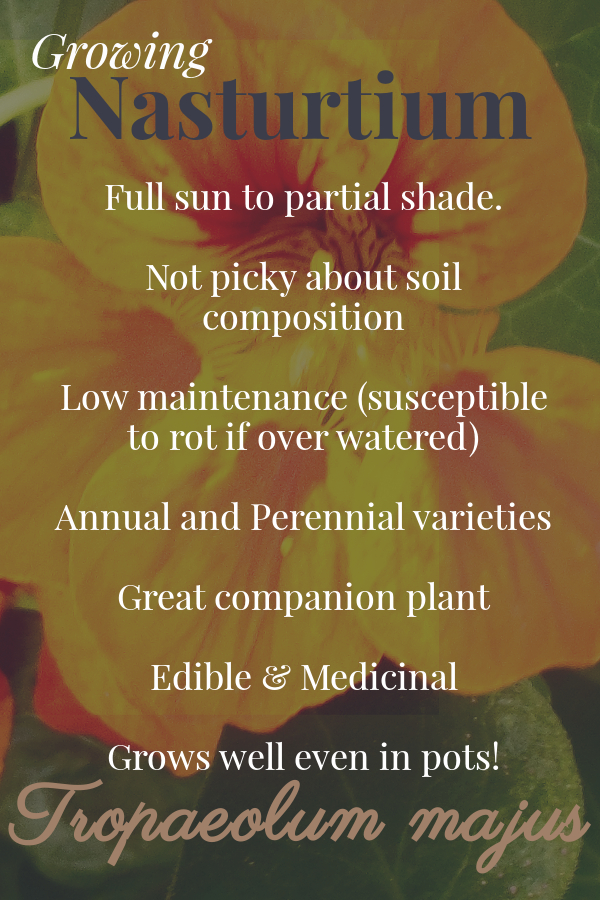 Full sun to partial shade. Not picky about soil compositions #low mainenance (susceptible to rot if over watered). Annual or Perennial varieties. Great companion plant. Eddible and Medicinal. Grows well even in pots!