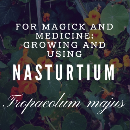 For Magick and Medicine: Growing and using Nasturtium (Tropaeolum majus)